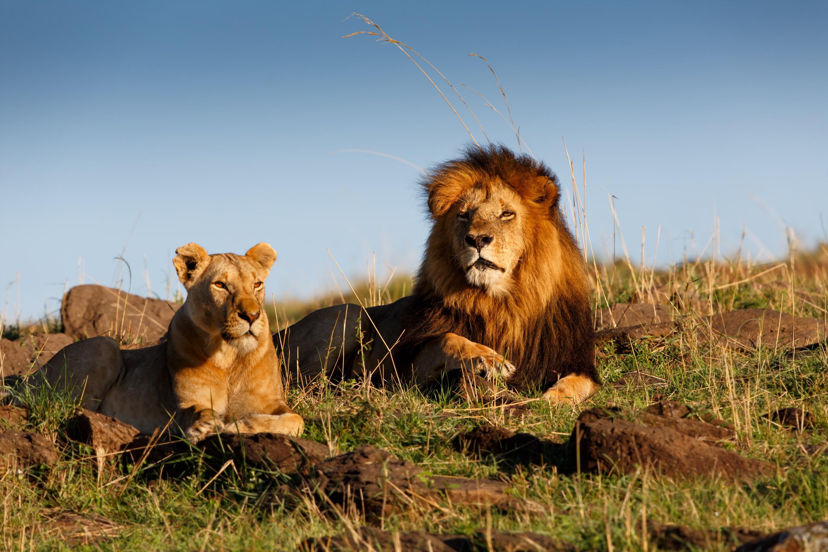 Voyage avec des animaux : Un safari dans tous ses états