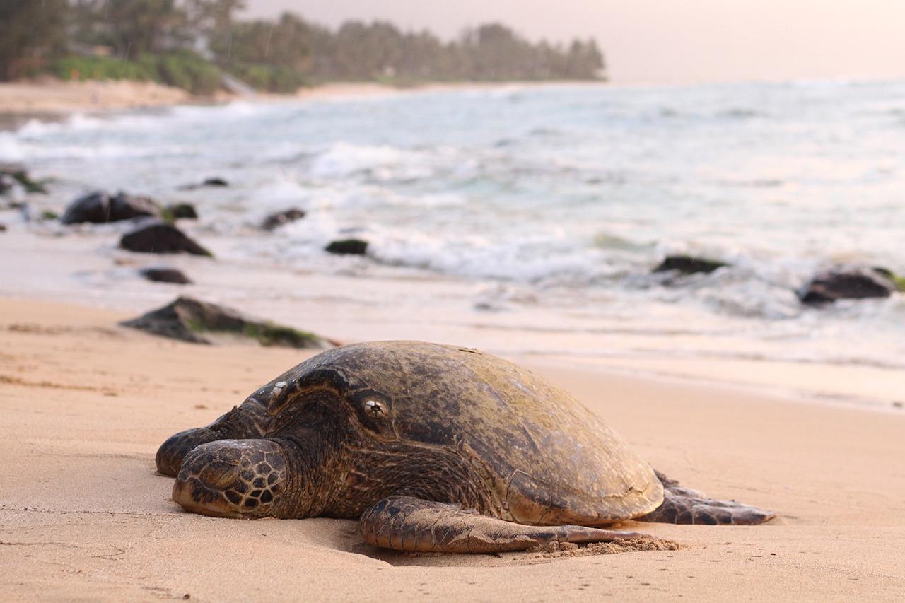 Voyage à pied : Java-est: bromo, kawah ijen & tortues de sukamade