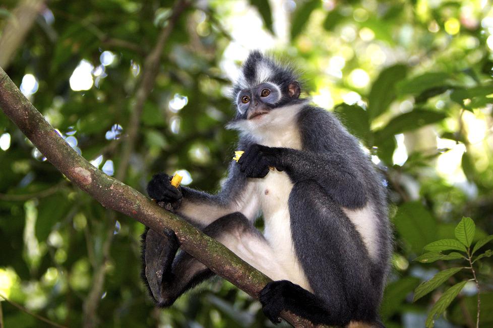 Voyage à pied : Mystérieuse sumatra