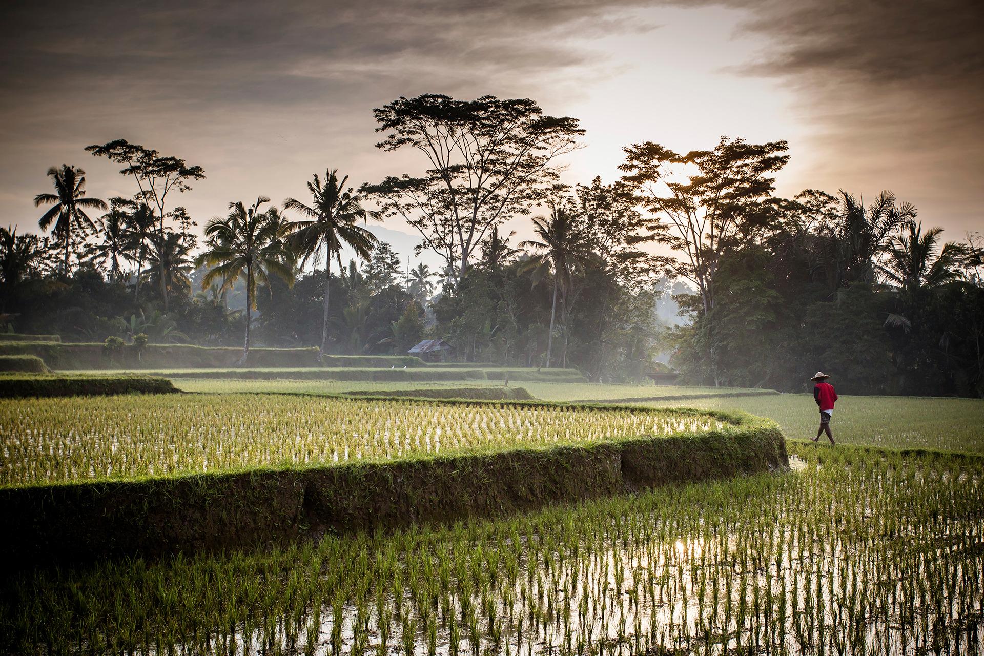 Voyage à pied : Découverte au départ de ubud