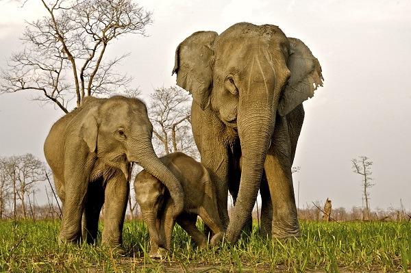 Voyage à pied : Parcs nationaux de kaziranga et de sundarban