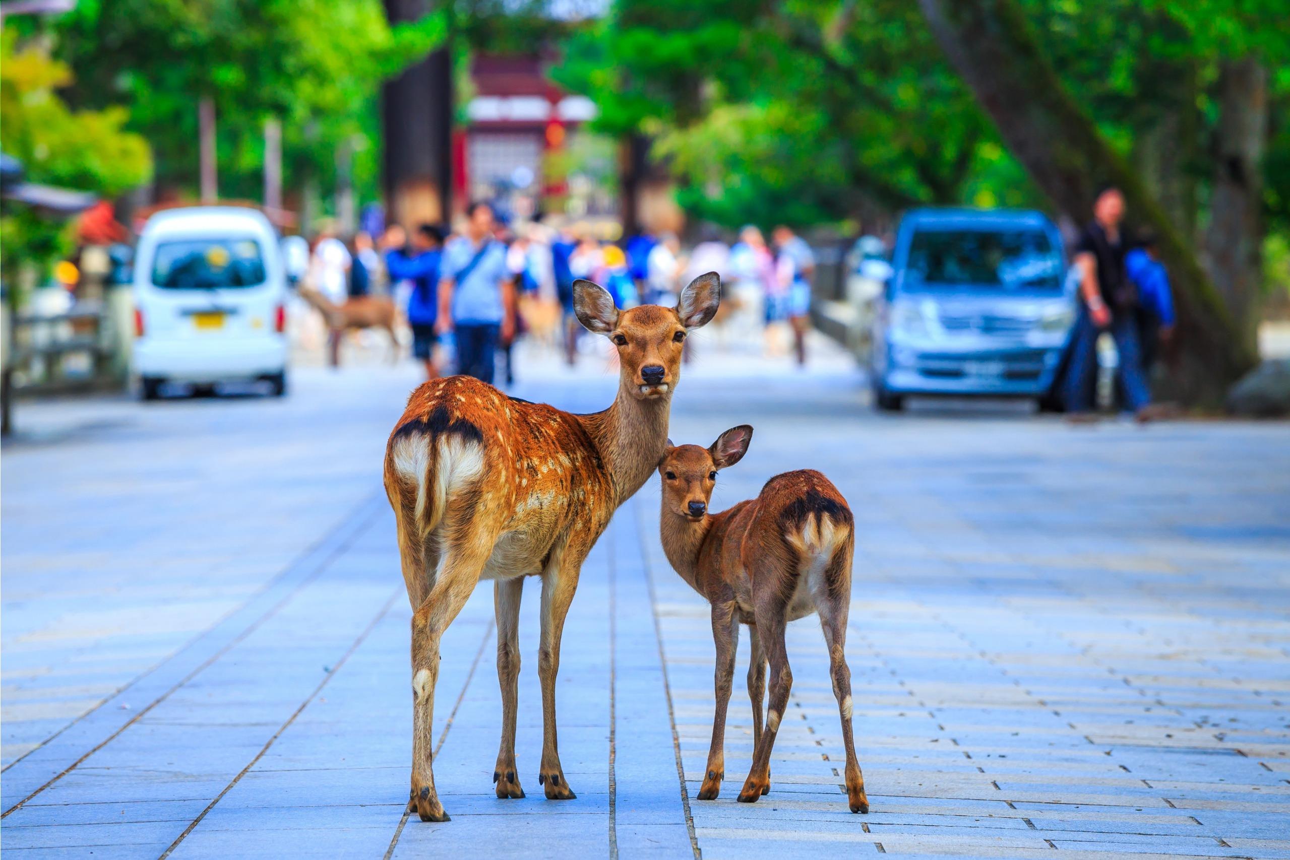 Voyage à pied : Le japon en famille
