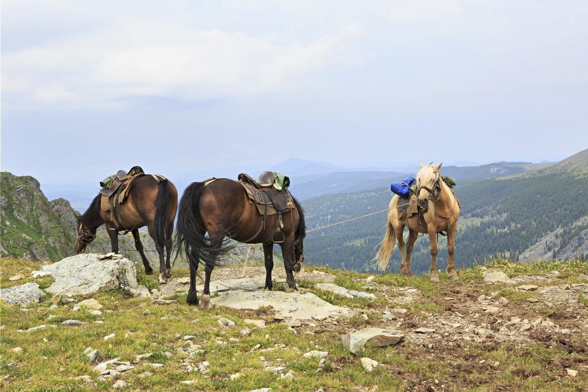Voyage avec des animaux : Kirghizistan : Chevauchée à chon-kemin