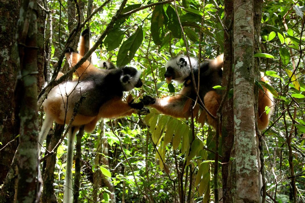 Voyage à pied : Découverte malgache