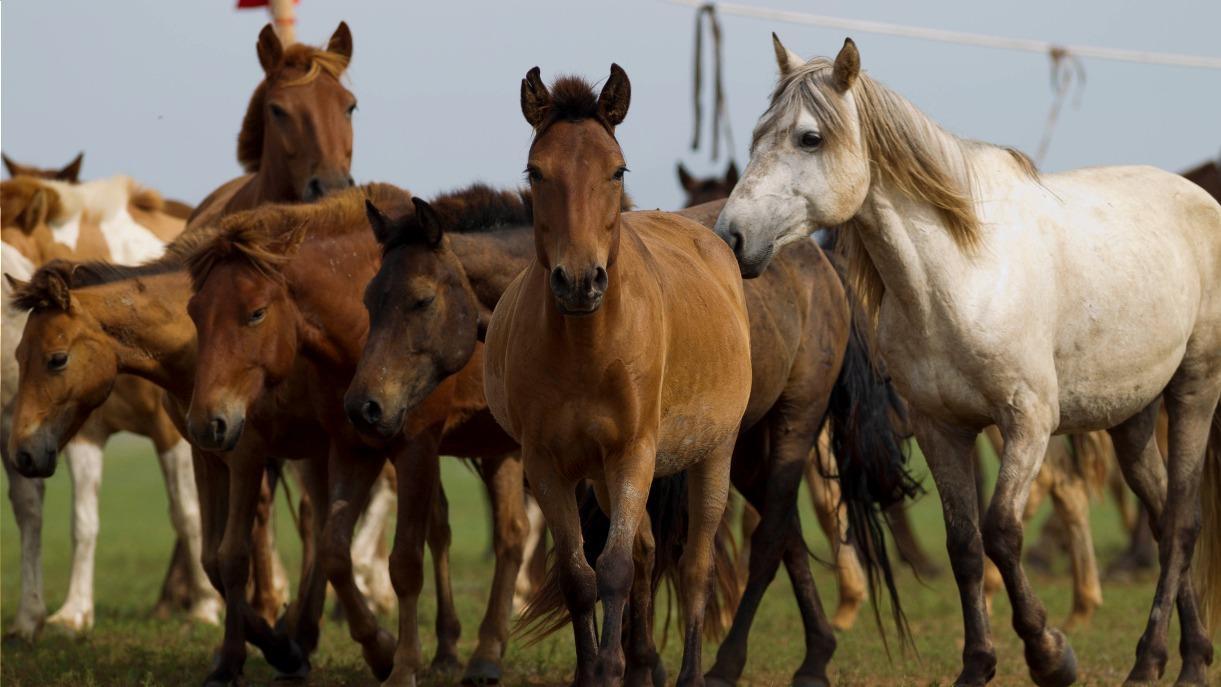 Image à cheval dans le khan khentii