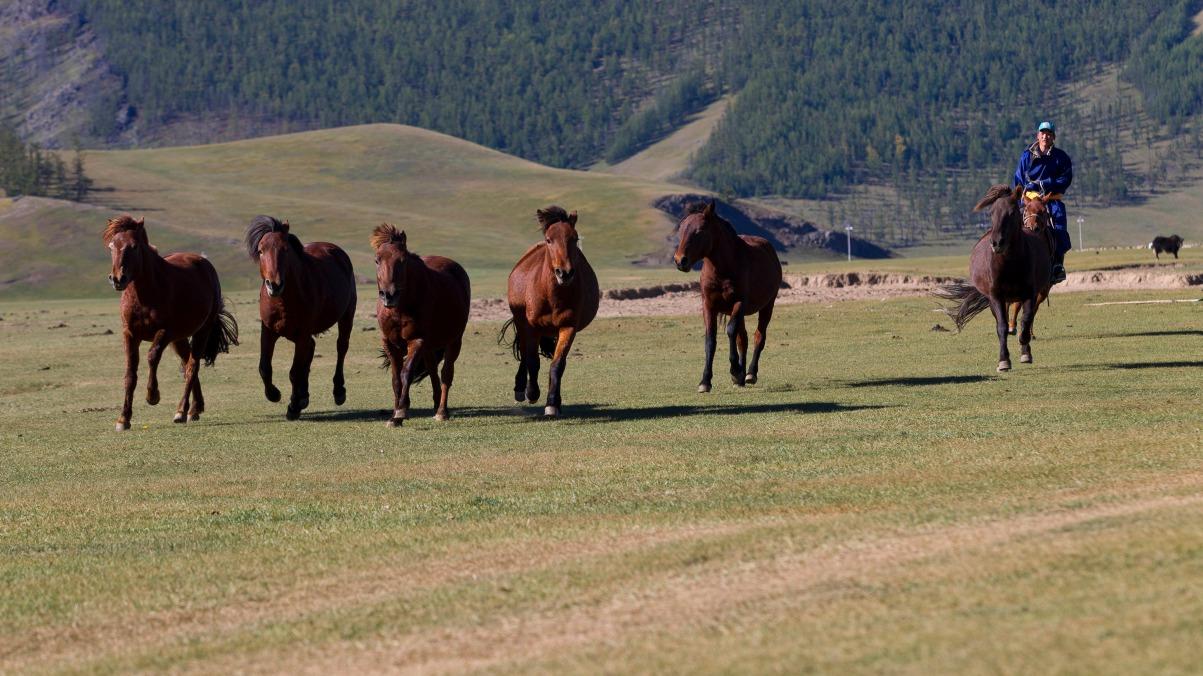 Voyage avec des animaux : Mongolie : Trek et cheval