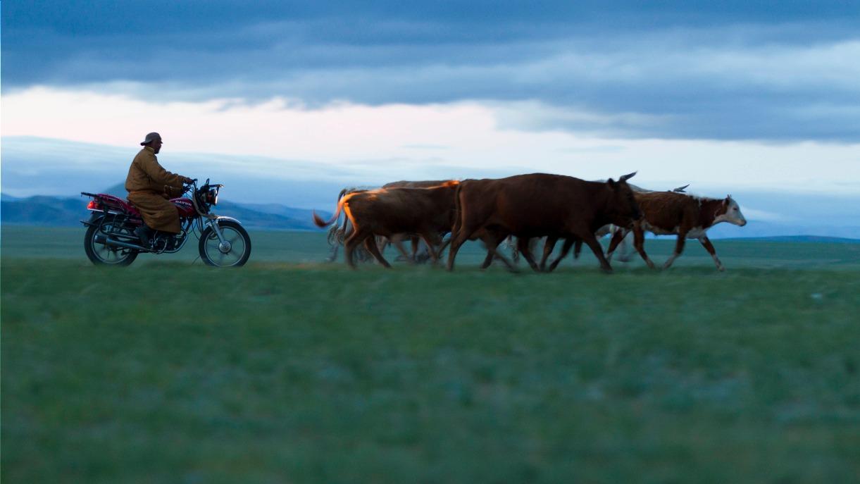 Voyage à pied : Vie nomade dans la vallée de l\'orkhon