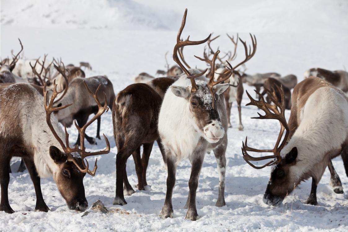 Voyage avec des animaux : Mongolie : à cheval chez les éleveurs de rennes