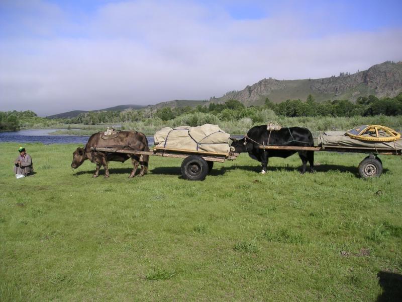 Voyage à pied : Mongolie : Nomadisation dans le khan khentii