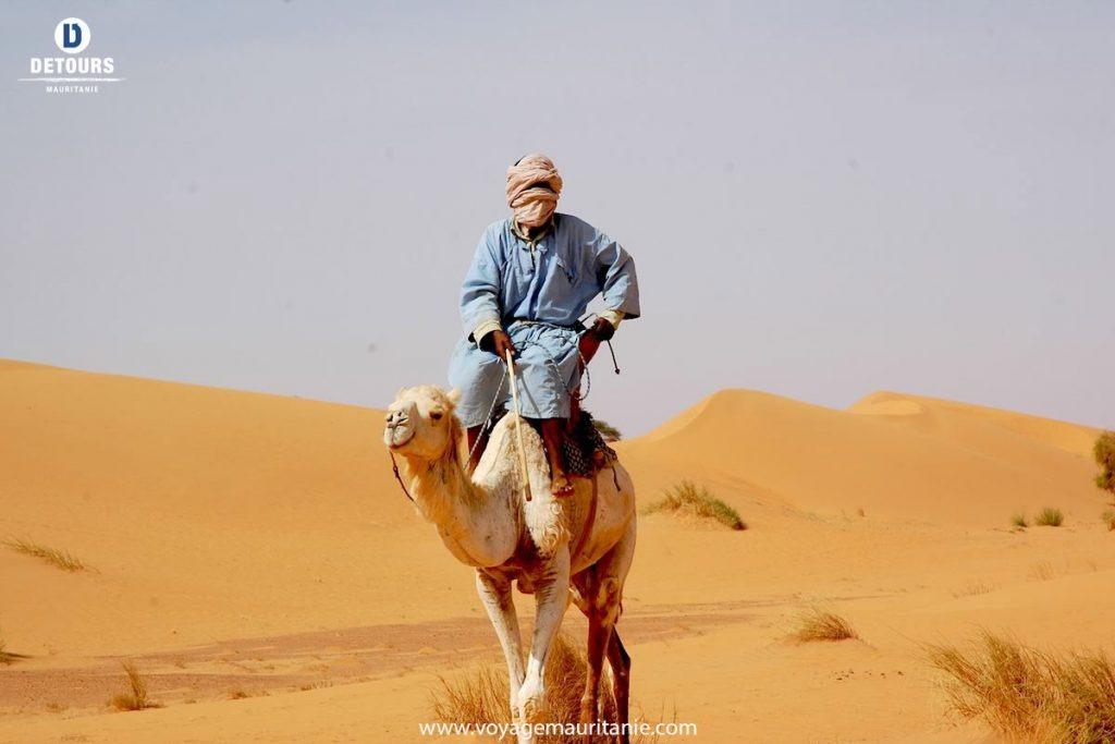 Voyage avec des animaux : Méharée, en selle dans l\'adrâr mauritanien