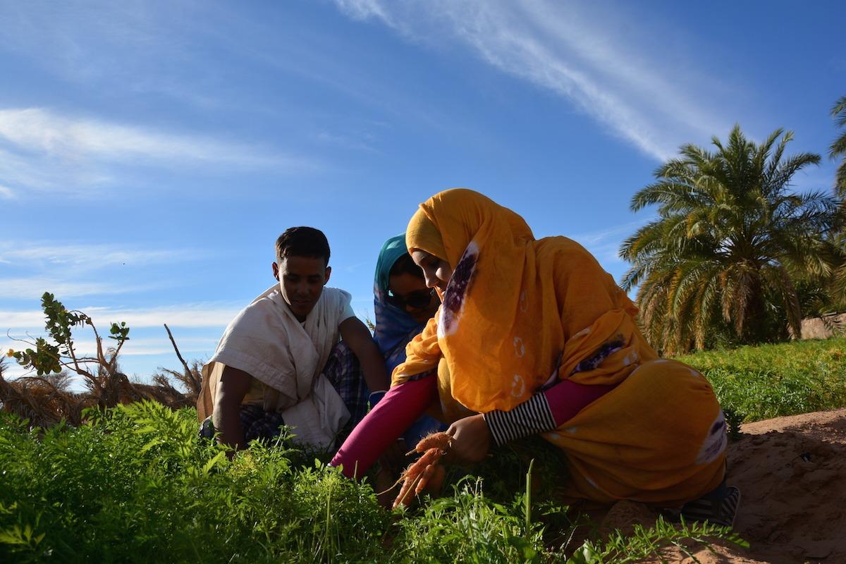 Voyage à pied : Du banc d\'arguin aux confins de l\'adrâr mauritanien