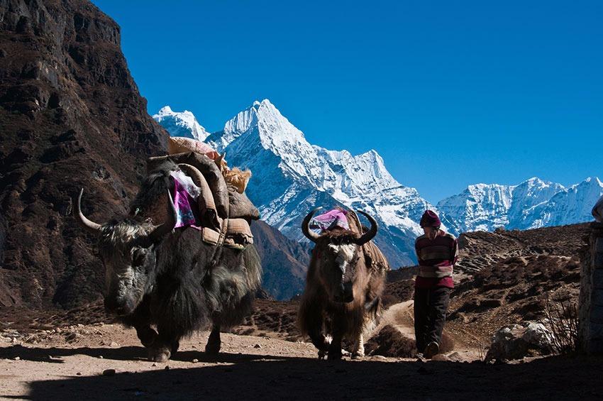Voyage à pied : Namche bazaar : la capitale des sherpas