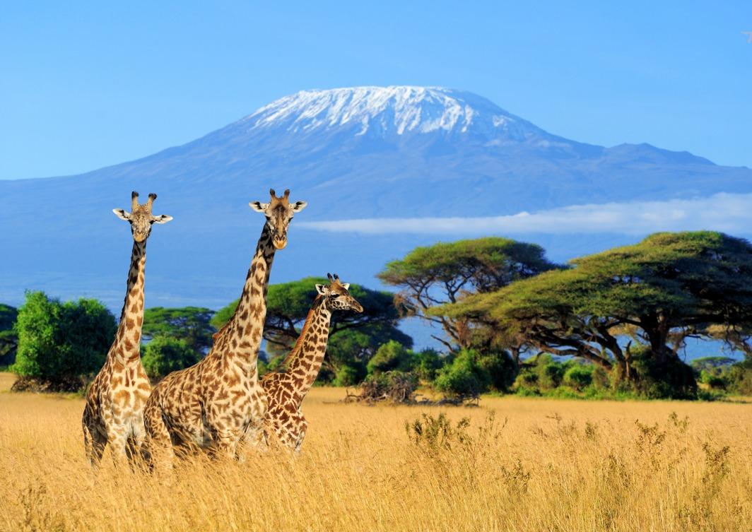 Voyage à pied : Tanzanie : Machame route : 8 jours dont 7 jours / 6 nuits dans la  montagne